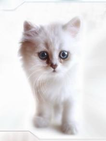 Скачать Игру Про Котенка - фото 6